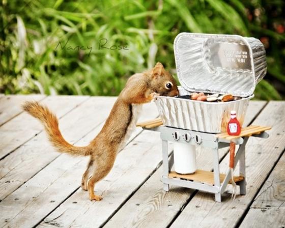 Un-Jour-dans-la-vie-dun-Écureuil-10