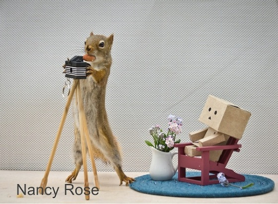 Un-Jour-dans-la-vie-dun-Écureuil-2
