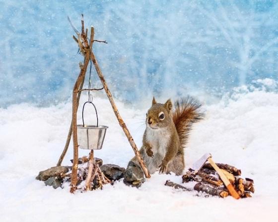 Un-Jour-dans-la-vie-dun-Écureuil-3